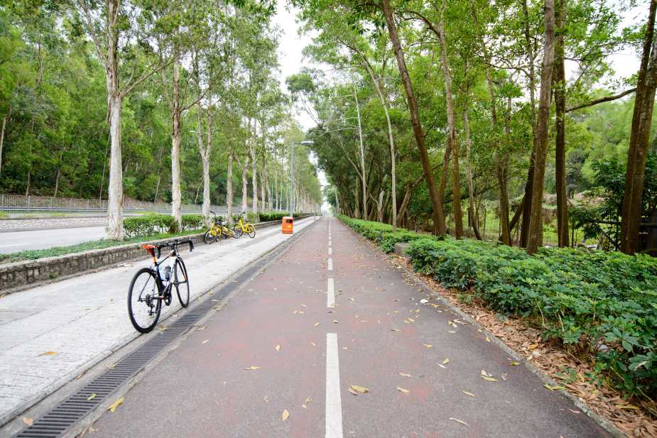 A beautiful lane with tall tree on the sides - Ting Kok Road