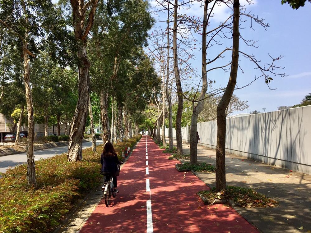 Bike path outside Policy Driving Training School next to Jockey Club Road