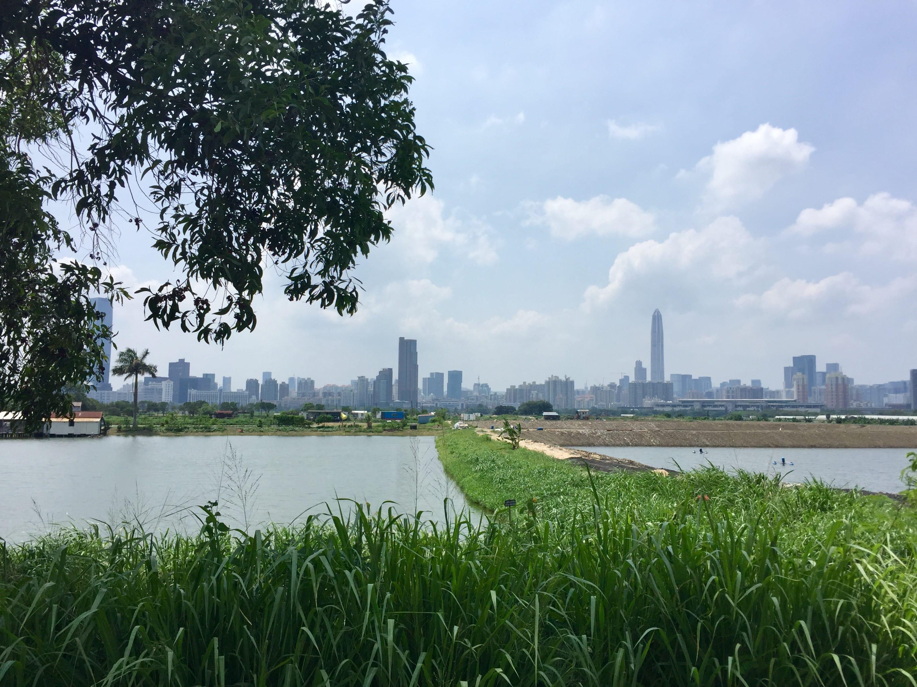 View of Shenzhen at San Tin Tsuen Road