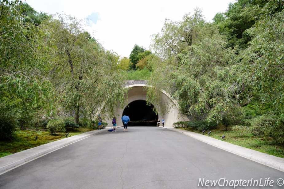 Tunnel at the end of the climb with cherry blossom trees along the sides (sorry I was not not in the right season!)